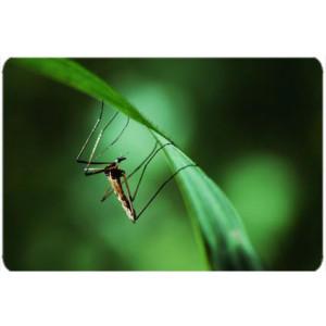 Destructeurs Insectes
